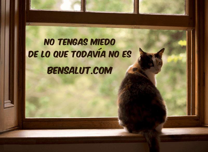 gato_ventana_miedo_anticipacion.jpg