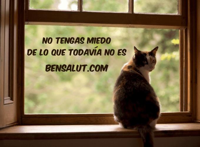 gato_ventana_miedo_anticipacion